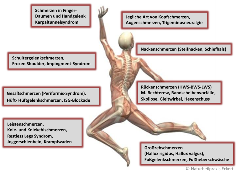 Ausgezeichnet Nierenarterien Anatomie Galerie - Anatomie Ideen ...